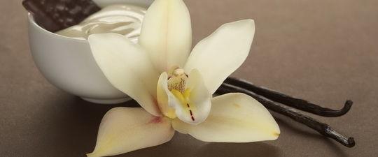 Цветок и стрючки ванили (натуральный ванилин)