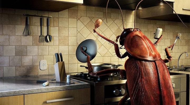 Таракан на кухне