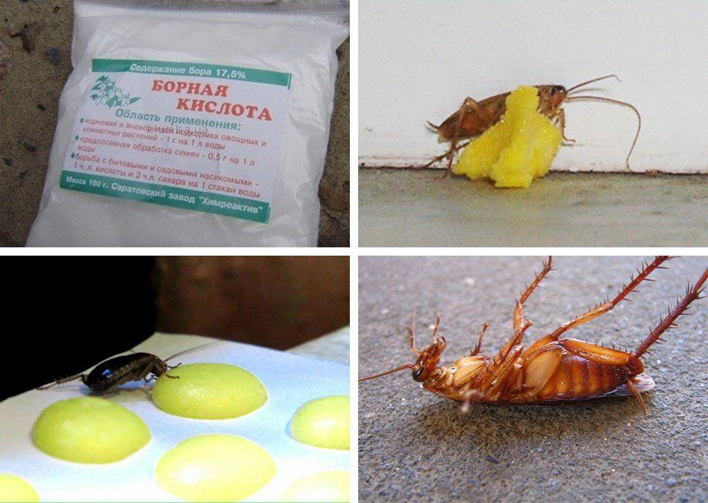 Средство от тараканов с борной кислотой и яйцом рецепт с пошагово 176