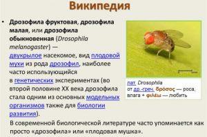 Виды мошек дрозофил