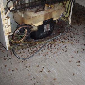 Влажные места в квартире любое место обитания тараканов