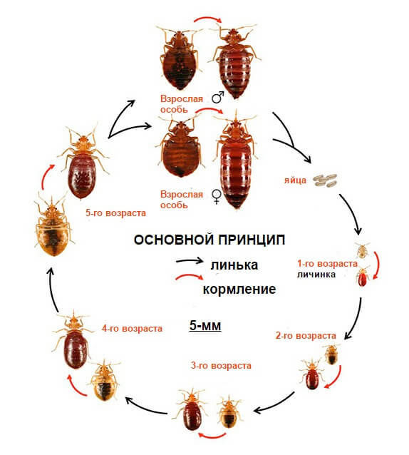 фото как тараканы размножаются