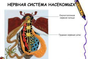 Антицитин притупляют обоняние насекомых