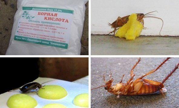 Борная кислота очень эфективна в борьбе с тараканами