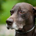 Как защитить собаку от мошек