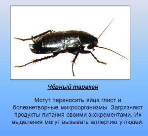 Опасность которую несут тараканы для жизни человека