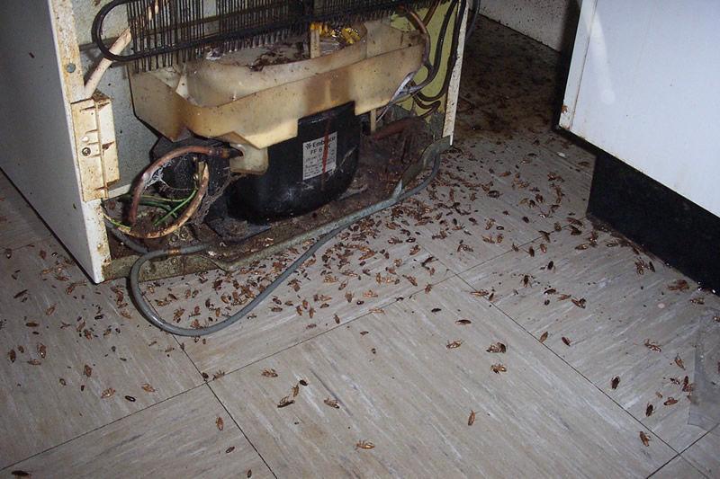 Место обитания тараканов