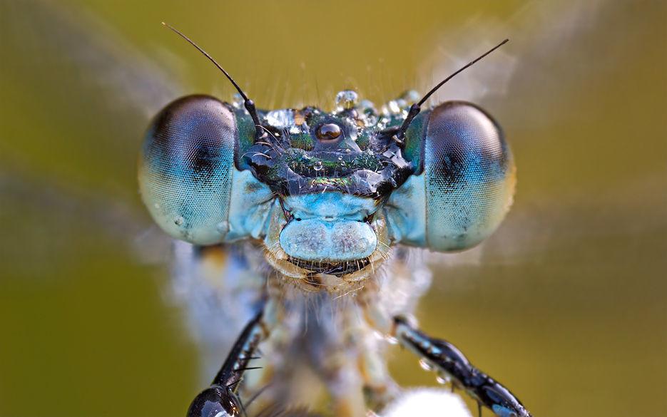 Нападение кровососущих насекомых на природе