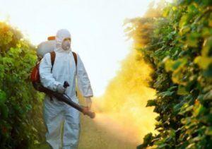 Окуривание сада от вредителей