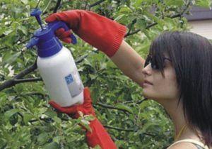 Опрыскиваем листья винограда средством которое приготовили