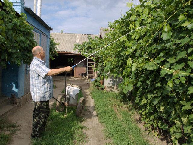 Опрыскивание винограда химическими препаратами от болезней