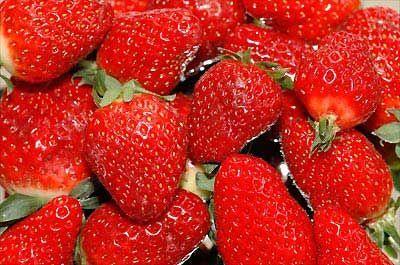 Плодовые растения выращиваемые в грибницах могут привлечь мошек