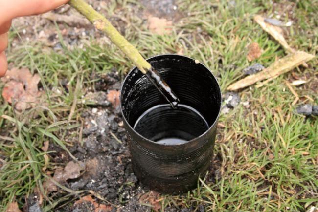 Полученный деготь нужно смешать с водой в пропорции 1 к 2