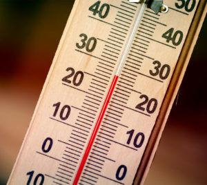 При температуре +25 градусов мошка будет жить 10 суток