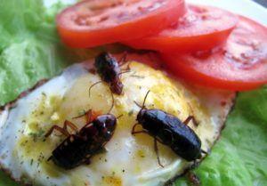 Яйцо с тараканами
