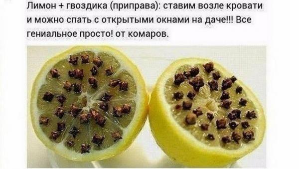 Простое средство от комаров в домашних условиях