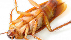 Раптор не оставляет никаких шансов таракану на жизнь