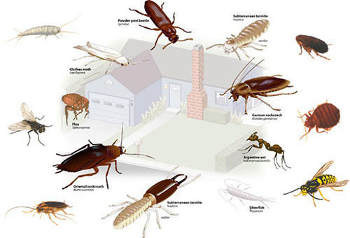 Рефтамид защитит вас от всех видов опасных насекомых