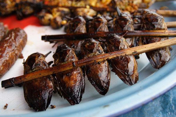 Шашлык из мадагаскарского таракана