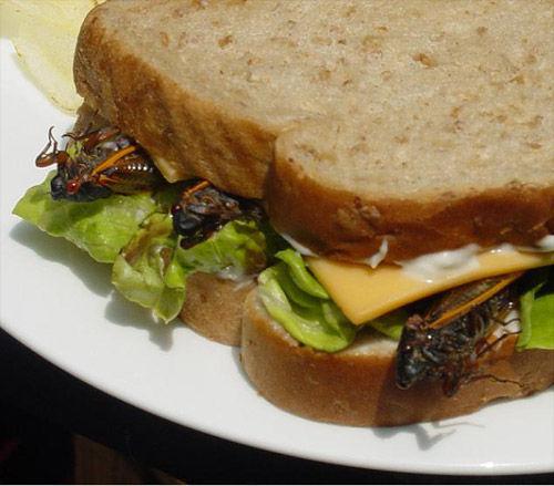 Сендвич с паштетом из тараканов