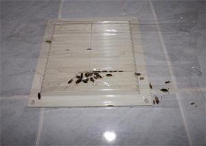 Тараканы приходят через вентиляцию от соседей