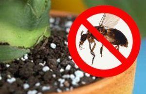 Уход за растениями на балконе уменьшит вероятность появления мошки