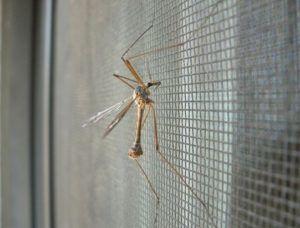 Установка москитных сеток на окна защитит вас от мошек