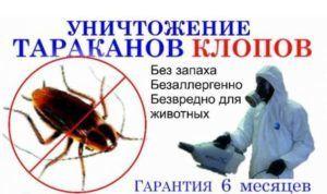Вызвать спецслужбы по борьбе с тараканами на много эфективнее чем бороться с ними самому
