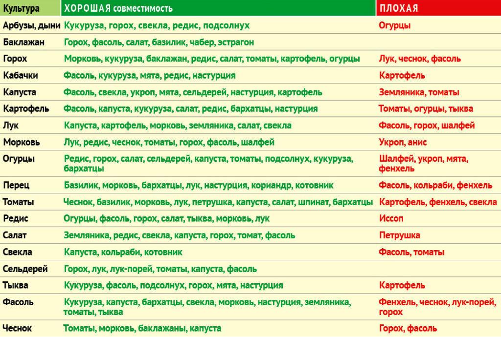 таблица совместимости при посадке различных культур на одной грядке