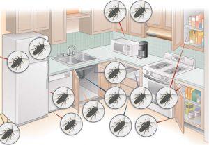 На рисунке показаны места где чаще всего обитают тараканы