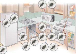 Где прячутся и откуда приходят тараканы