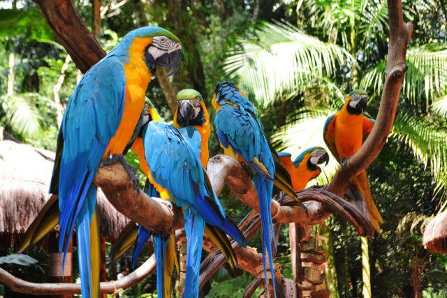 Бразильский национальный парк Игуасу