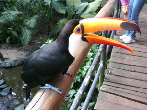 Парк птиц на бразильской стороне Игуасу