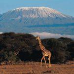 Гора в Африке