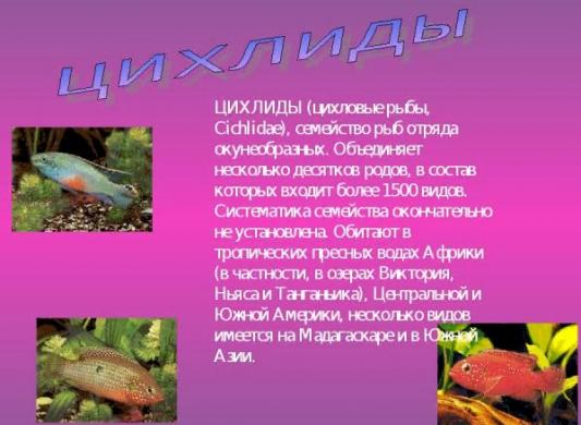 Рыбки семейства цихловых